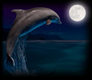 icon_dolphins